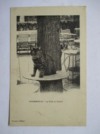 CHAMBERLIN  -  LE  CHAT  DU  CASINO           TTB - Cats