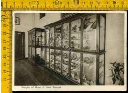 Genova Rivarolo Museo - Genova