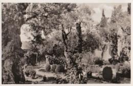 AQ49 Jerusalem, The Garden Of Gethsemani - RPPC - Israel