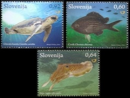 2013Slovenia1024-1026Sea Fauna - Meereswelt