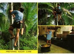 PREPARING SUGAR CANE  (TAILANDIA) - Tailandia