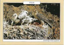 CPM. FAUCON ET SA NICHEE. ISLANDE. - Oiseaux