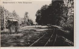 19 / 8 / 50  -   C P S M. PHOTO. -  BOCSA - MONTANÄ - Roumanie