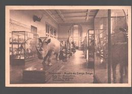 Tervuren / Tervueren - Musée Du Congo Belge - Salle Des Mammifères / Zaal Der Zoogdieren - Neushoorn / Rhino - Tervuren