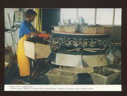 Carnac (56) : Au Chantier Tibidy, Le Saisonnier, Calibre Le Huitre Sur Une Machine Rotative - Carnac