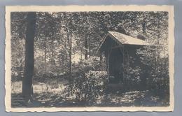 BE.- Photo Van F. Hoelen, Capellen. 1926. Kapelletje In Bos. - Te Identificeren