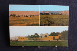 I - 31 / Asie - Saudi Arabia - Around Riaydh - Cultivation Of Céréals - تحية من المملكة العربية السعودية - Arabie Saoudite