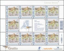 2829 Meine Marke 2011 - Vögel Uferschnepfe Grutto Limosa Limosa, Kleinbogen ** - Nederland