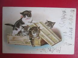 Chats Qui Sortent D Une Boite . Dos 1900 - Phantasie