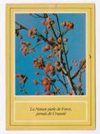 AK39 Berries On A Tree - Flowers, Plants & Trees
