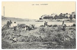 Cpa: 20 SAINT FLORENT (ar. Bastia) Le Battage Du Blé (animée, Boeufs) N° 1398  Coll. J. Moretti - France