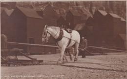 HASTINGS --THE CAPSTAN HORSE. JUDGES - Hastings