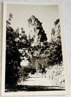 Postcard, Postal, Carte Postale / Spain, Espagne, España - Mallorca, La Calobra - Mallorca
