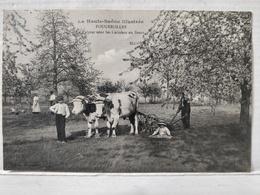 Fougerolles. Labour Sous Les Cerisiers En Fleurs. Animée - France