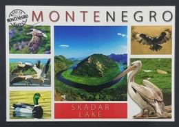 Postcard, Skadarsko Jezero, Skadar Lake, Birds, Montenegro, Nonused - Montenegro