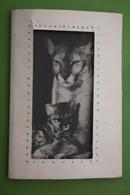 Leningrad Zoo. 9 PCs Lot - Old USSR Postcard. 1960s -  -  Jaguar - Lion -  Giraffe - Non Classificati
