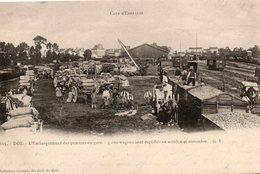 Dol  De  Bretagne -    L' Embarquement  Des  Pommes  En  Gare -    3000  Wagons  Sont Expédiés  En Octobre  Et  Novembre - Dol De Bretagne