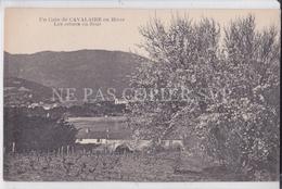 CPA CAVALAIRE 83 EN HIVER LES ARBRES EN FLEUR - Cavalaire-sur-Mer
