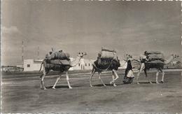 CPSM Djibouti Caravane - Gibuti