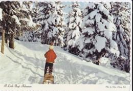 AP63 Children - A Little Boy's Adventure - Snow, Sledge - Children And Family Groups