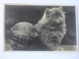 N13 Ansichtkaart Uit 1936 Met Poes - Katten