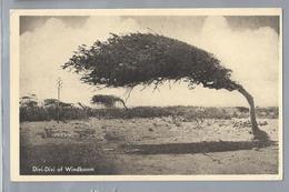 US. CURACAO. Divi-Divi Of Wndboom. Uitgave: R.K. Zeemanshuis. Ongelopen. - Curaçao