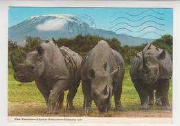 CC 046 /  RWANDA   /  Rhinocéros Noir / Black  RHINOCEROS : Das Schwarze Rhinozeros  ( Nice Stamp ) - Rwanda
