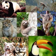 FAUNA WWF  Postcard Collection (100 Differents) - Size:15x10 Cm. Aprox. - Animales