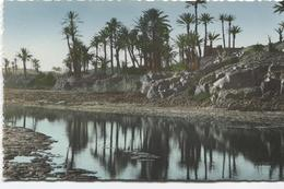 Suid Marocain - L'oued Draa - Ed. La Cicogne 95.360.10 - Rabat