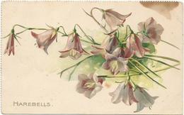 W4100 Fiori Fleurs Flowers - Illustrazione Illustration / Non Viaggiata - Fiori
