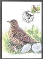 CM 2920 - Oiseau Buzin - Pipit Farlouse - Maximum Cards