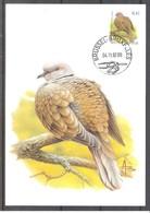 CM 3135 - Oiseau Buzin - Tourterelle Turque - Maximum Cards