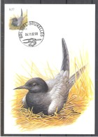 CM 3136 - Oiseau Buzin - Guifette Noire - Maximum Cards