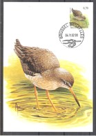 CM 3137 - Oiseau Buzin - Chevalier Gambette - Maximum Cards