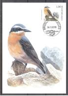 CM 3138 - Oiseau Buzin - Traquet Motteux - Maximum Cards