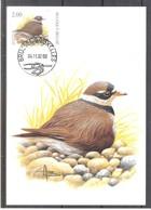 CM 3139 - Oiseau Buzin - Grand Gravelot - Maximum Cards