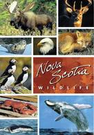 25D : Nova Scotia Whale,seal,fox,deer,elk,puffin Multi View Used Postcard With Stamp - Animals