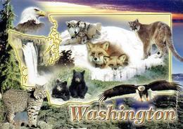 25D :Animals Wild Cat, Fox, Wolf, Hawk, Bear Waterfall Multi View Used Postcard With Stamp - Tierwelt & Fauna