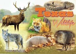 25D : Texas Wildlife,fox,wolf,wild Boar,snake Multi View Used With Stamp - Animals