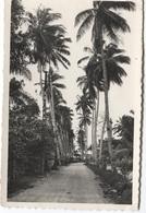 Douala Allée Des Cocotiers -  Nr 293 - Ed Pauleau - Palmiers  Palmboom - Cameroun