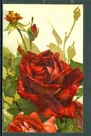 20673 - Catharina Klein (1861-1929) - Fleurs - Rose Rouge Avec Boutons  - Raphaël Tuck, Série 800 - Klein, Catharina
