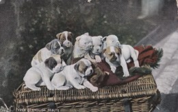 AQ51 Animals - Tuck Oilette, Animal Studies - Dogs - Dogs