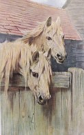 AS73 Animals - Horses - 2 White Horses By A Fence - Artist Signed - Chevaux