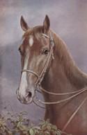 AS73 Animals - Horses - Brown Horse - Tuck Oilette, Artist Signed CR - Caballos