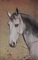 AS73 Animals - Horses - White Horse - Tuck Oilette, Artist Signed CR - Chevaux