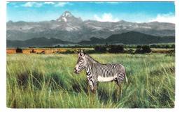 Tanzania - African Wild Life - Zebra - Animal - Nice Fish Stamp Stamps Timbre Timbres - Tansania