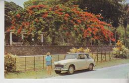 AUTO AUTOS CAR VOITURES  TRINIDAD E TOBAGO ROYAL BOTANIC GARDENS - PKW