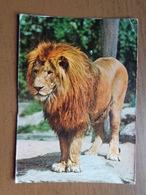 Leeuw, Lion / Lowen, Tiger Und Grosswild Autosafari, Salfkant-Tuddern (corners Bit Damaged) - Lions