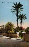 BERMUDA , TARJETA POSTAL SIN CIRCULAR , COCOANUT PALMS , PALMERAS - Postales