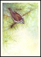 BIRDS. CRESTED TIT. Artist A. Isakov. USSR, 1979. Unused Post Card - Oiseaux